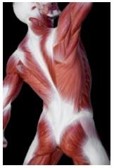 understanding lower back pain  4 essential realities