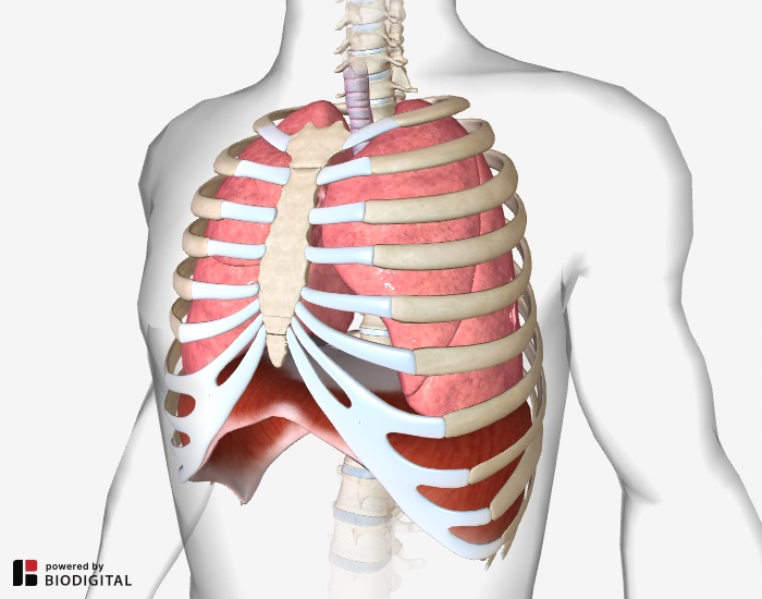 Diaphragmatic Breathing Relieving Back Pain With Your Breath